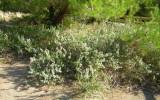 specie erbacee, arbustive e arboree