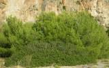 specie erbacee, arbustive e arboree2